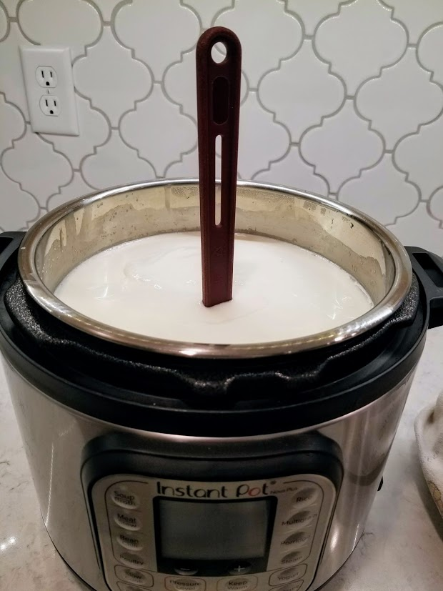 fermented yogurt with spatula standing up in it